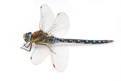 Free Dragonfly Stock Images - 3159134