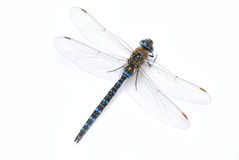Free Dragonfly Royalty Free Stock Image - 3159156