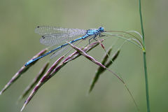 Dragonfly Стоковые Изображения