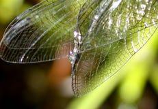 крыла dragonfly Стоковые Изображения
