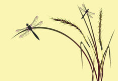 Dragonfly. On a yellow background Royalty Free Stock Photos