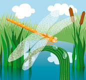 Dragonfly. Perched on a blade of grass Stock Images