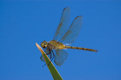 Dragonfly. stock photo