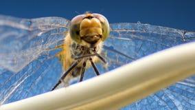 Dragonfly zbiory