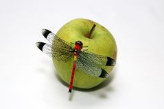 Dragonfly and apple Royalty Free Stock Images