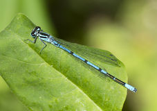 Dragonfly-arrow Royalty Free Stock Images