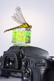 Dragonfly attracted by the spirit level on a modern DSLR camera. Dragonfly (Western Clubtail, Gomphus pulchellus, Westliche Keiljungfer) attracted by the spirit Stock Photo