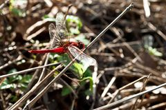 Dragonfly on a background of haystack. The dragonfly is associated with summer and early autumn Royalty Free Stock Photos