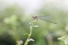 Dragonfly 304 Stock Image