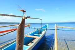 Dragonfly on bamboo boat, North Sulawesi. Royalty Free Stock Photos