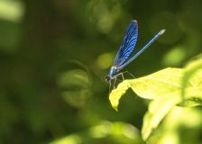 Dragonfly basking in the sun on leaves near pools overlooking Kravica Waterfall royalty free stock image