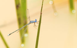 Dragonfly. The dragonfly with beautiful colors Stock Photography