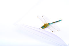 Dragonfly on a book. Dragonfly on book white pages on white background Royalty Free Stock Photography