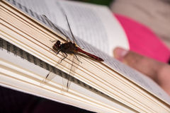Dragonfly on book Royalty Free Stock Photography