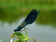 Dragonfly on branch. Spring season summer fly wings nature insect Royalty Free Stock Image