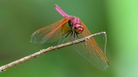Dragonfly on branch.