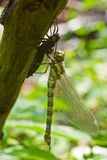 Dragonfly and bug Royalty Free Stock Photography