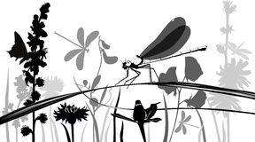 Dragonfly, butterflies, insects vector illustration