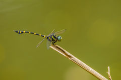 The dragonfly catch on Stock Images