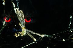 Dragonfly in spider web. Dragonfly caught in spider web with red eye staring, end of the freedom Stock Photo