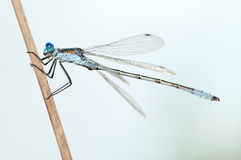 Dragonfly close Stock Photo