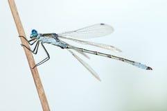 Dragonfly close stock photo