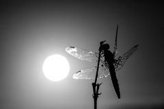 Dragonfly in close up Stock Images