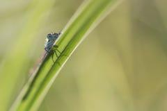 Dragonfly Stock Photos