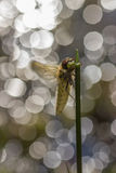 Dragonfly close up. In the nature stock image