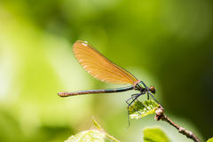 Dragonfly close up. In the nature stock images
