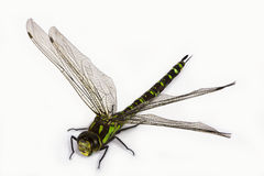 Dragonfly Stock Image