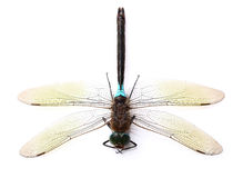 Dragonfly in closeup Stock Photos