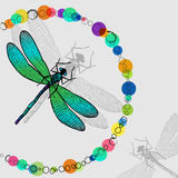 Dragonfly with colorful  circles Royalty Free Stock Images