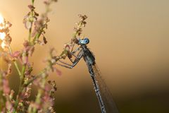 Dragonfly covered with dew Royalty Free Stock Image