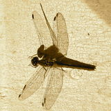 Dragonfly on crackle paint. Background Stock Photography