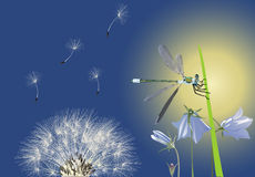 Dragonfly and dandelion illustration Stock Photos