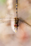 Dragonfly detail Stock Photo