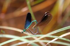Dragonfly. Dragonflies, invertebrates, arthropods, Insecta, winged suborder, dragonflies, winged suborder, subfamily of the family dragonflies and dragonflies stock image