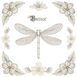 Dragonfly drawing vintage engraving style Royalty Free Stock Images