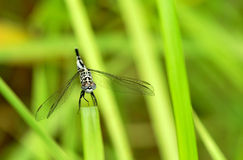 Dragonfly emergency landing Royalty Free Stock Images