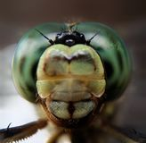 Dragonfly. The eye of dragonfly take by a smartphone amd additional lens royalty free stock image