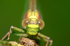 Dragonfly Eyes Macro Royalty Free Stock Images