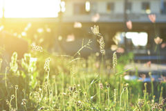 Dragonfly and flower grass with evening sun Stock Photos