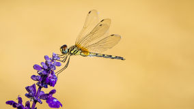 Dragonfly with flower Stock Image