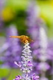 Dragonfly with flowers Royalty Free Stock Images
