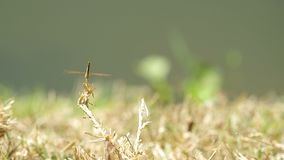 Dragonfly and fly stock video footage