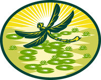 Dragonfly flying with lily pads Royalty Free Stock Photo