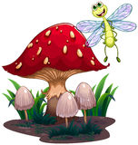 A dragonfly flying beside the mushrooms Royalty Free Stock Photos