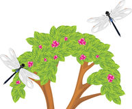 Dragonfly flying over the flowering bush Royalty Free Stock Image
