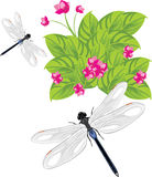 Dragonfly flying over the flowers Royalty Free Stock Images